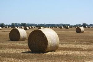 Zemědělství je v České republice velmi rozvinuté