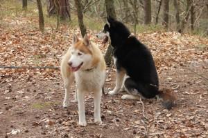 Jak pes vnímá čuch