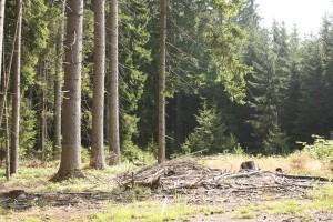 Definice a rozdělení sucha