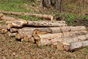 pohled ochrany přírody - ochrana lesů a vodních toků