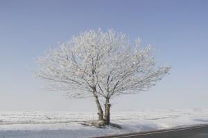 charakteristiky klimatu